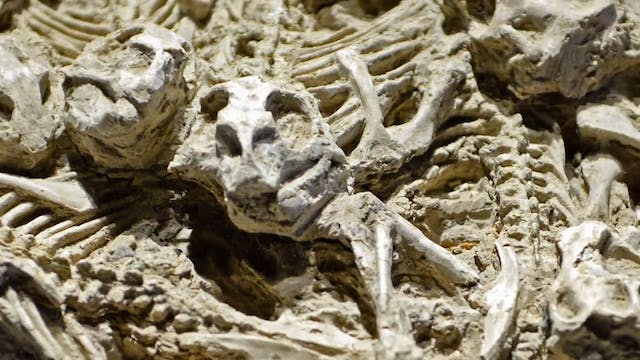 Fossil Record Noah's Flood or Evolution