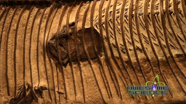 AS Glendive Fossil Museum Tour