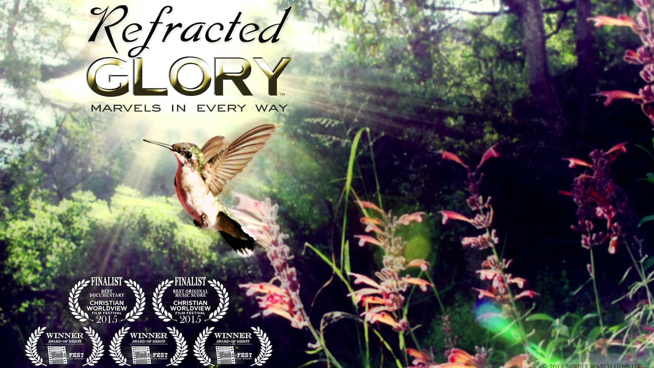Refracted Glory - The Hummingbird Documentary