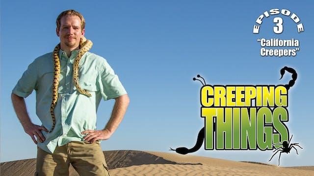 "CT""California Creepers"" Trailer"