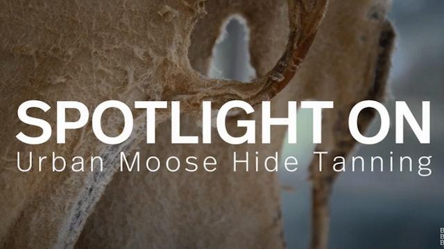Spotlight: Urban Moose Hide Tanning Camp