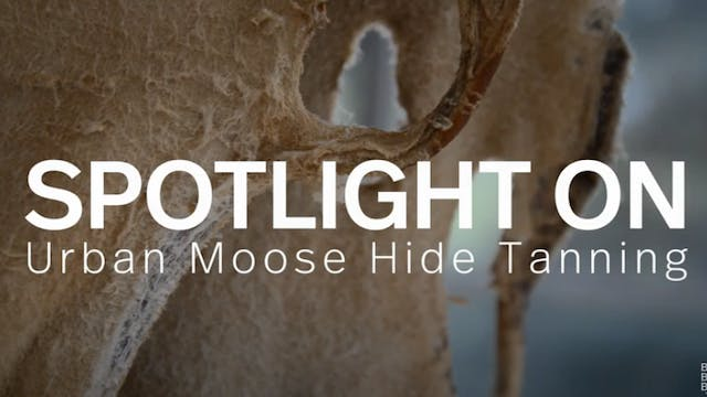 Spotlight: Urban Moose Hide Tanning Camp