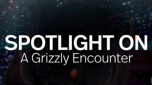 Spotlight: A Grizzly Encounter