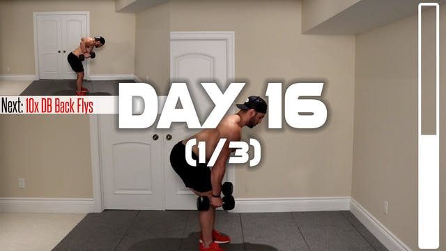 Day 16 (1/3): Back Workout