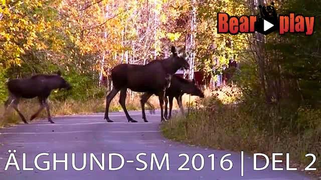 Älghund SM 2016 : Del 2