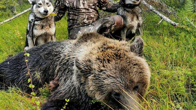 Åseletrappern : Björnjakt 1