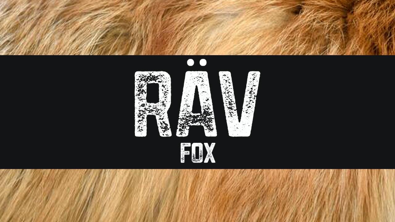 Räv | Fox