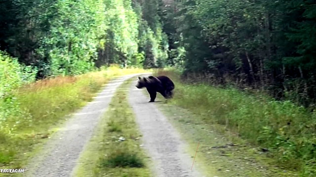 Björnjakten 2019 : Del 1