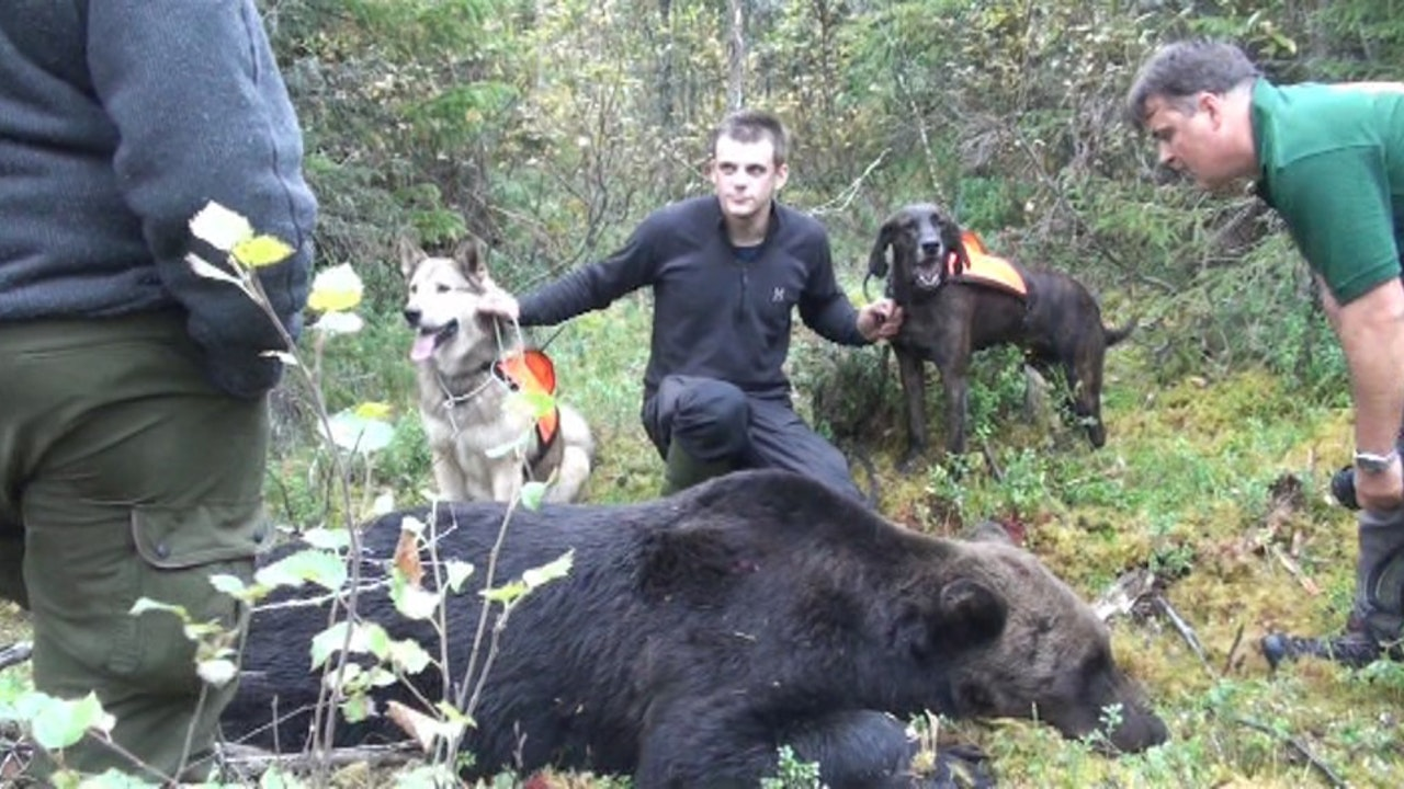 Rovdjursjakt med Niklas Friberg