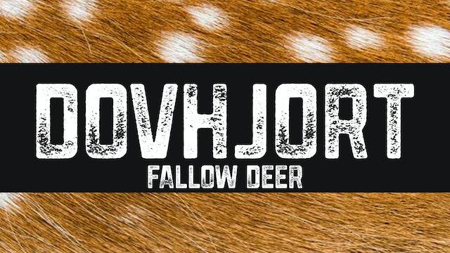 Dovhjort | Fallow deer