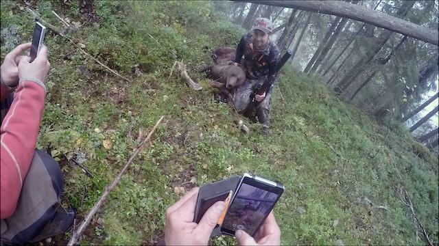 Björnjakten 2016 : Del 1