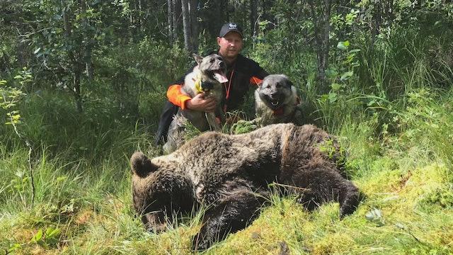 Martin Brenne Jegerliv : Björnjakt 2020 Del 1