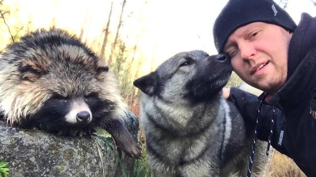 Martin Brenne Jegerliv : Tvättbjörnsjakt