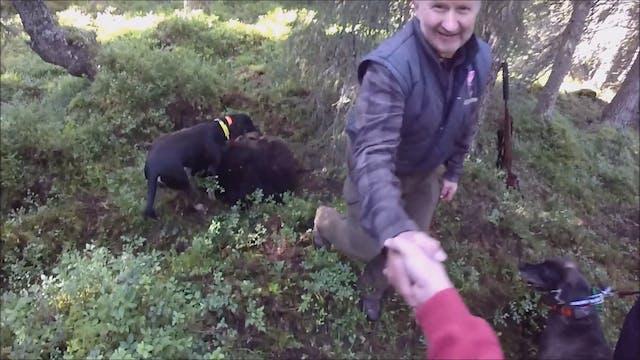 Björnjakten 2016 : Del 3