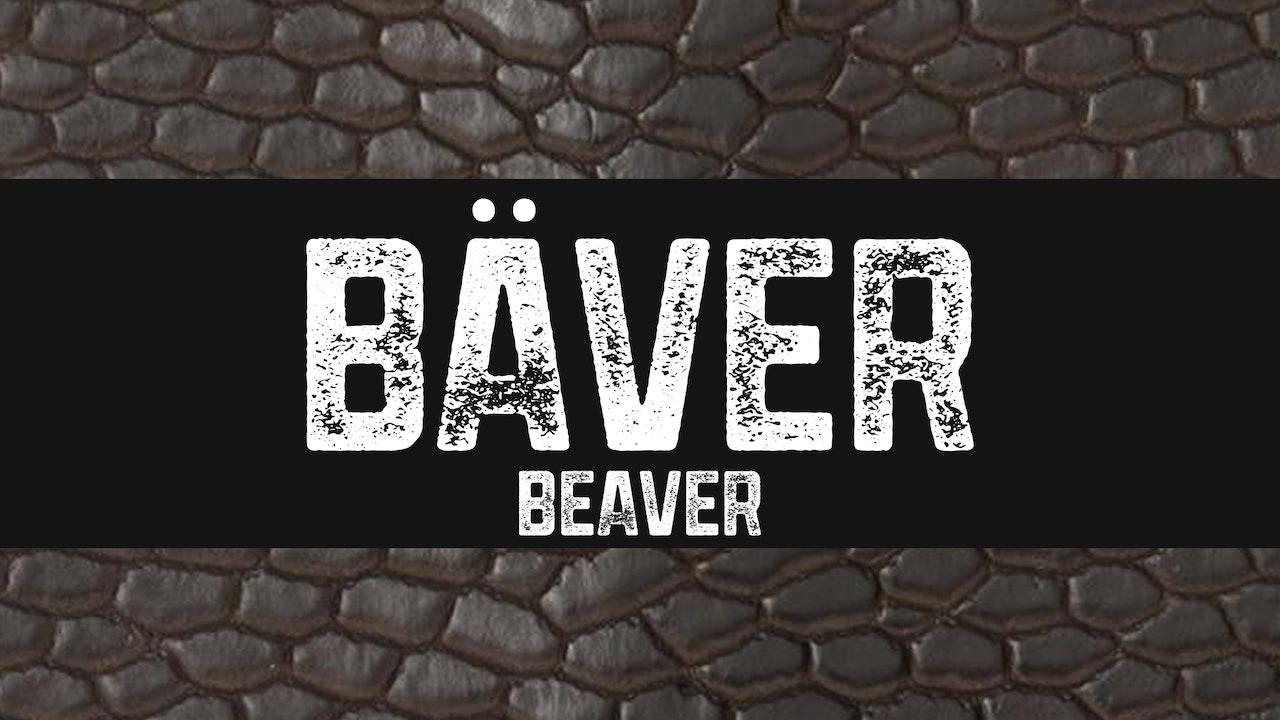 Bäver | Beaver