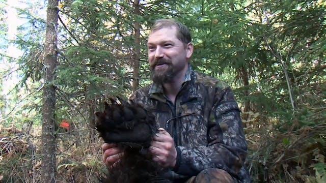 Svensk Björnjakt 2 Trailer