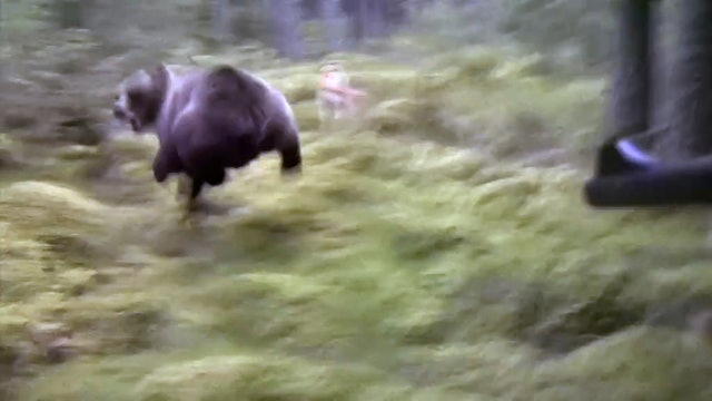 Svensk Björnjakt 3