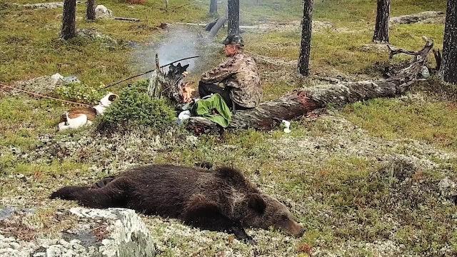 Björnjakt i Kessis Ödemark