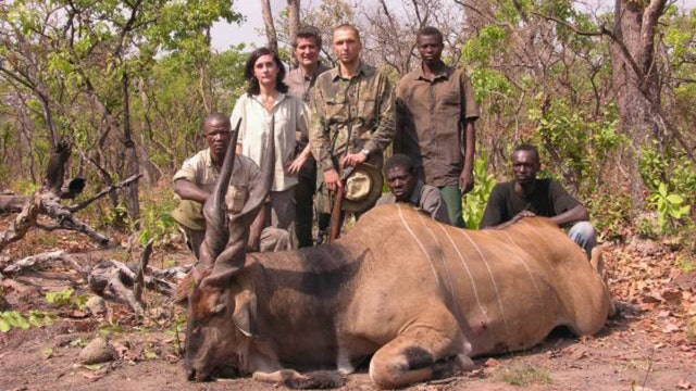 Seladang : Jakt På Jätteeland i Kamerun