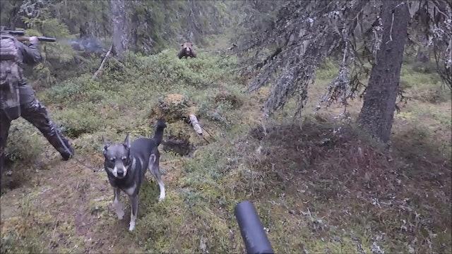 Björnjakten 2017 : Del 4