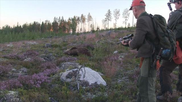 Björnjakten 2015 : Del 1