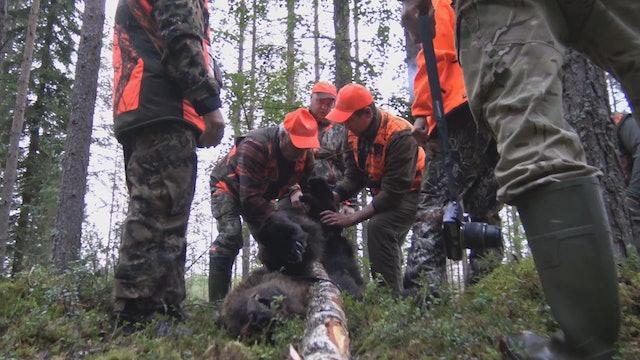 Team Karhukopla : Björnjakt i Finland 2017