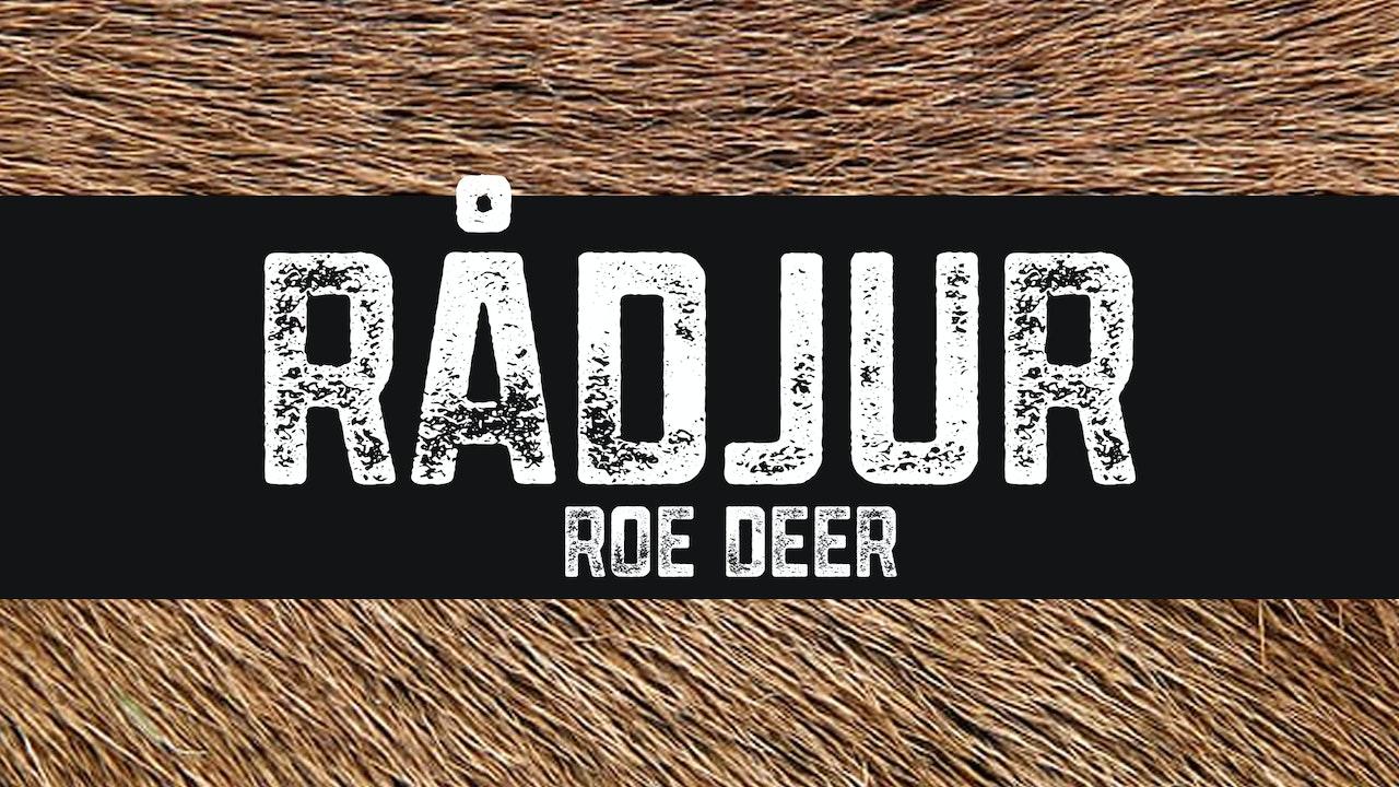 Rådjur | Roe deer