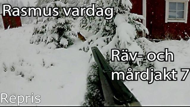 Rasmus Vardag : Räv- & Mårdjakt 7