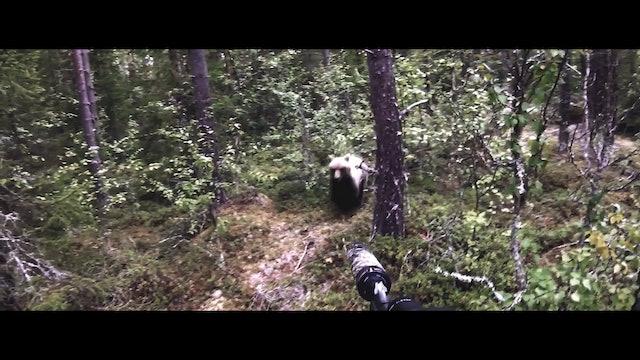 Svensk Björnjakt nr 5 : Trailer