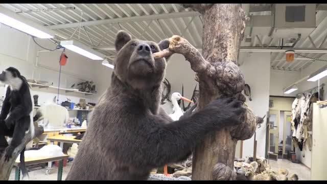 Bearplay Följer Med : Del 2