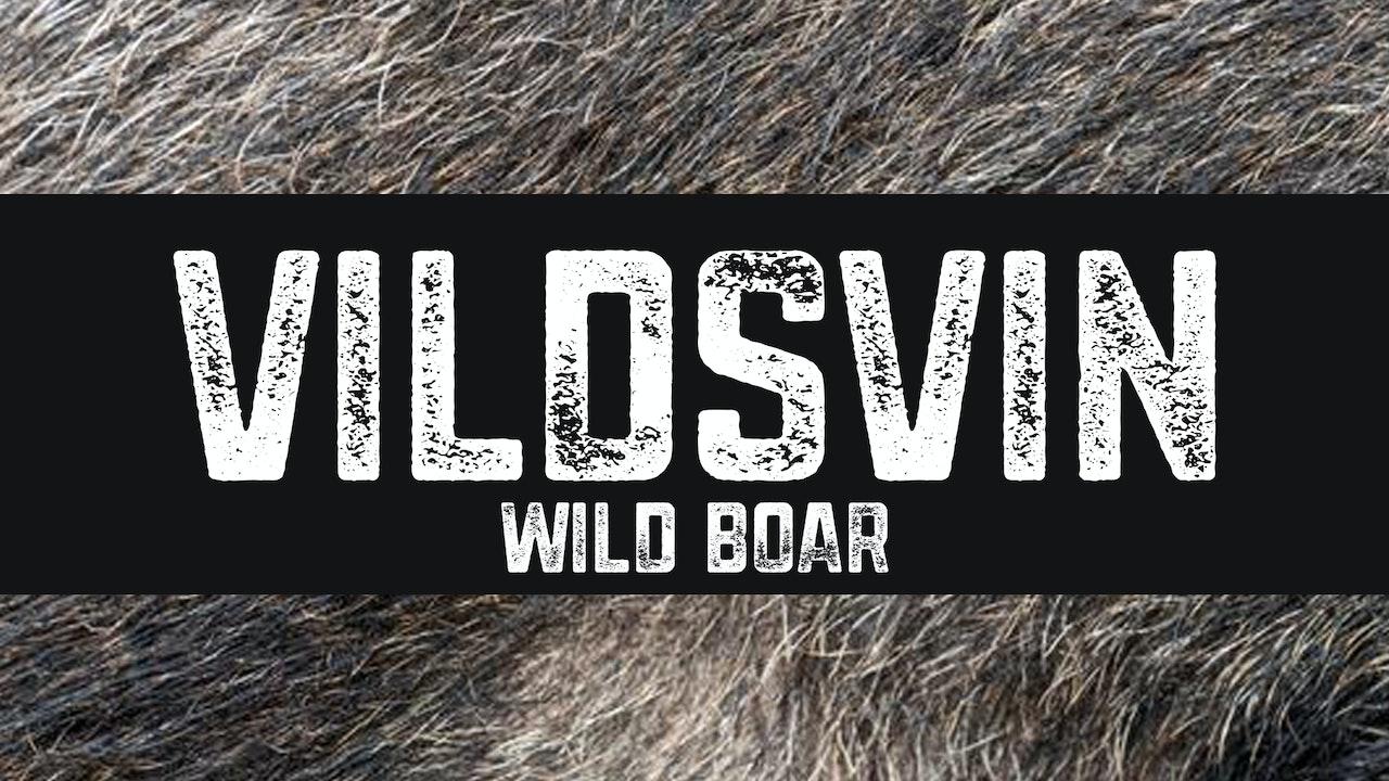 Vildsvin | Wild boar