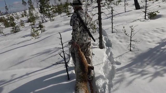 Rasmus Vardag : Lodjursjakt