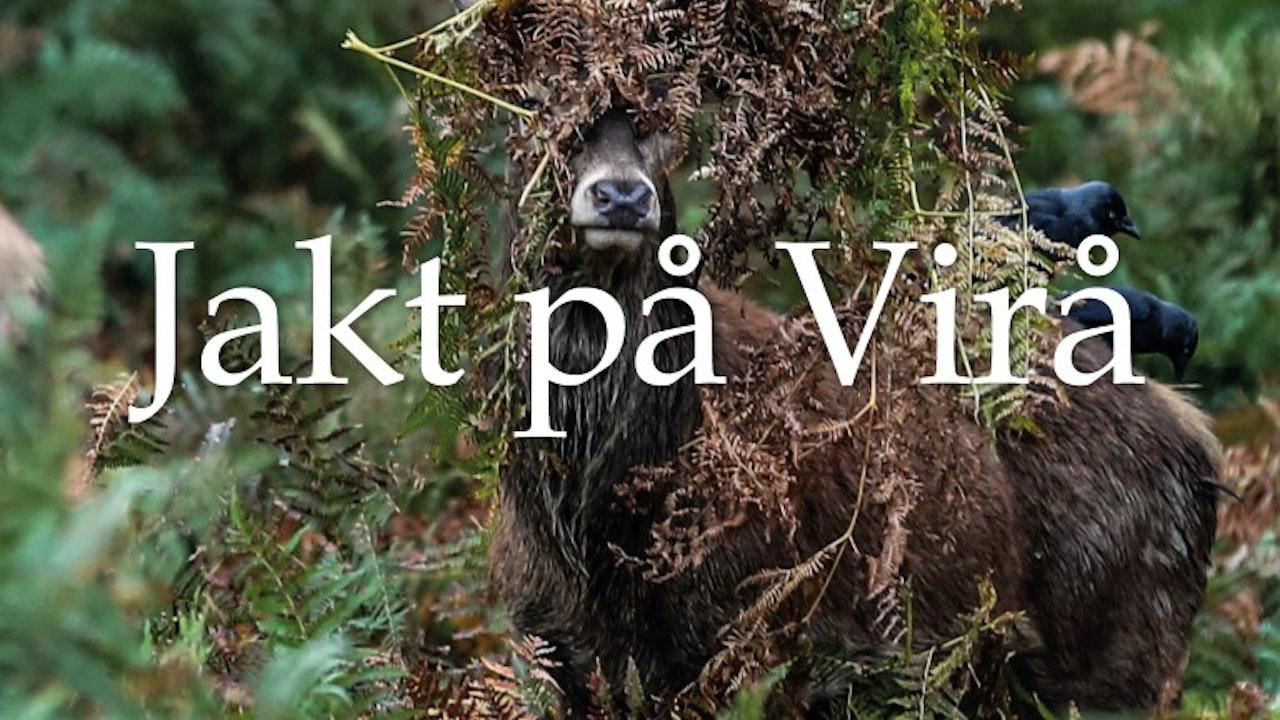Jakt på Virå