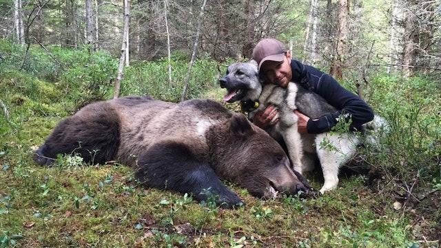 Martin Brenne Jegerliv : Björnjakt 1