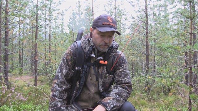 Björnjakten 2016 : Del 2