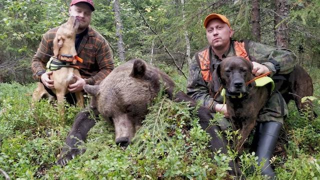 Team Karhukopla : Ståndskall på 260kg björn