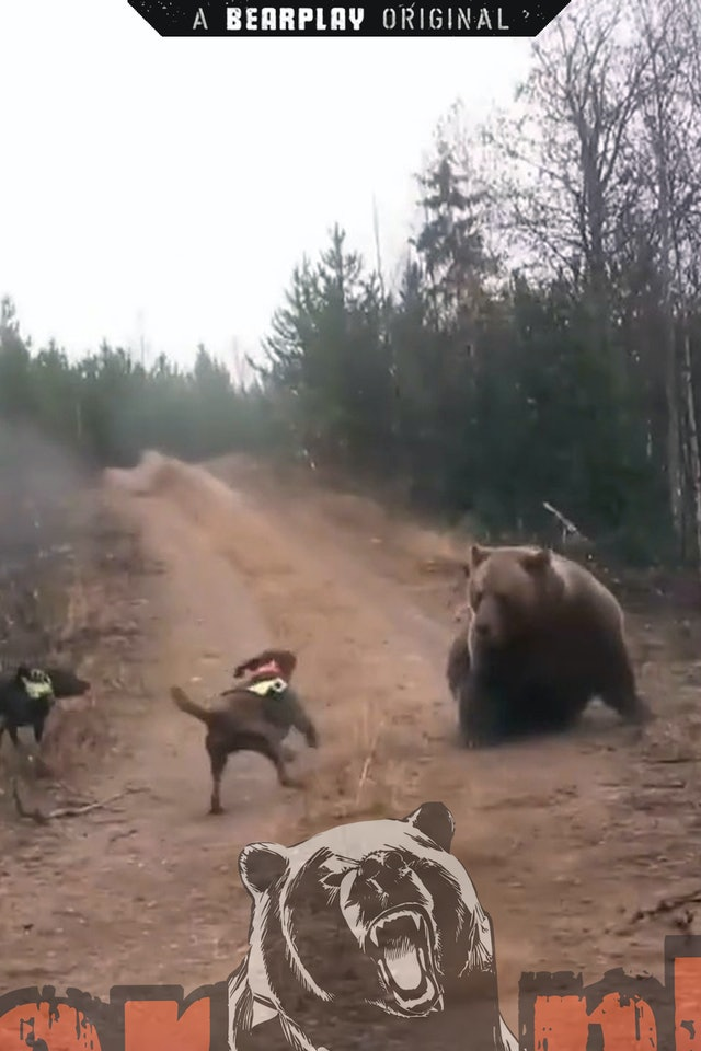 Svensk Björnjakt 4