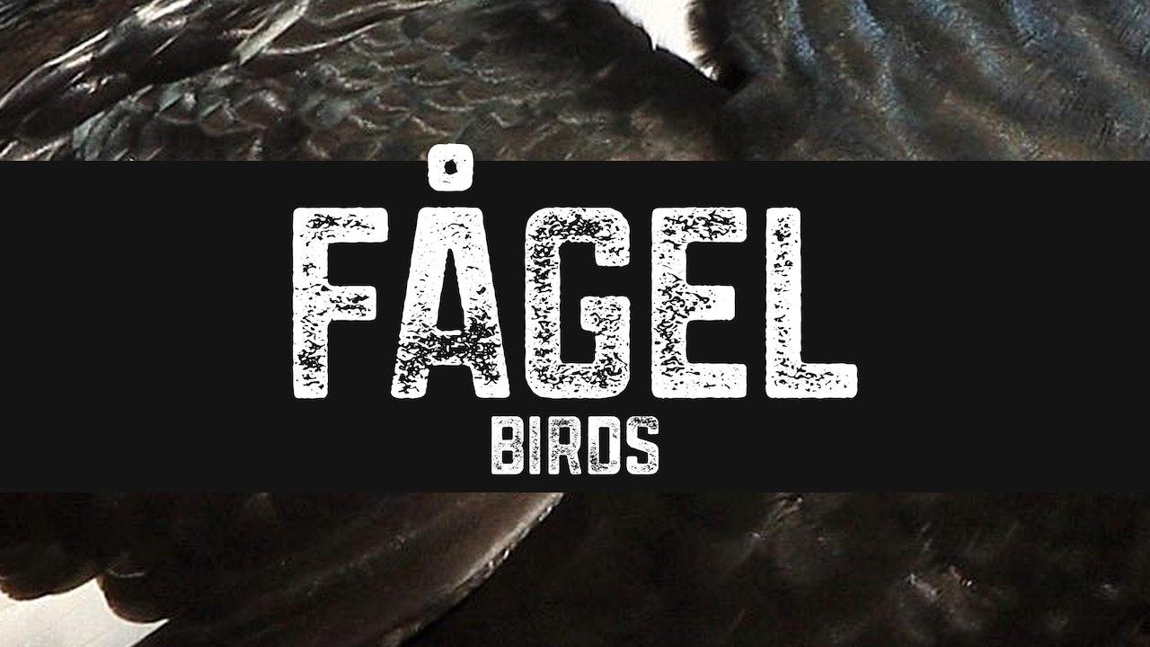 Fågel | Birds