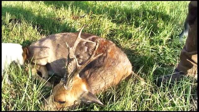 Seladang : Jakt På Gyllene Rådjur i Sibirien