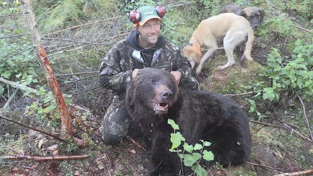 Björnjakten 2015 : Del 2