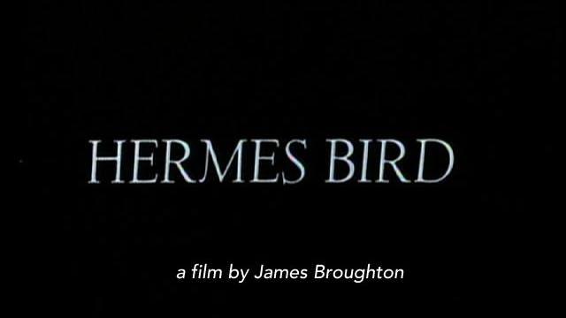 #Hermes Bird