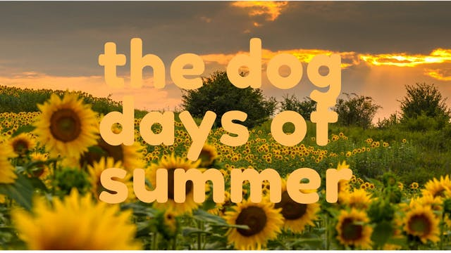 the dog days of summer, coming in august