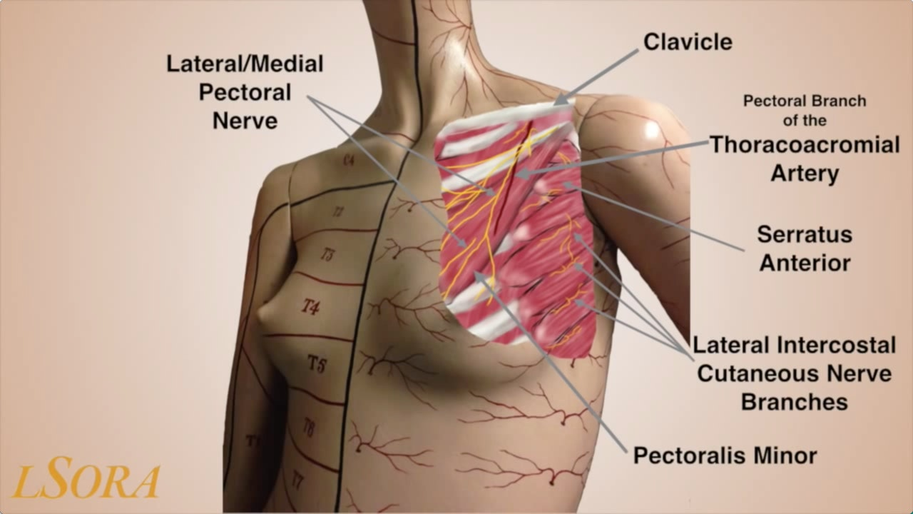 Pectoralis & Serratus Plane Blocks