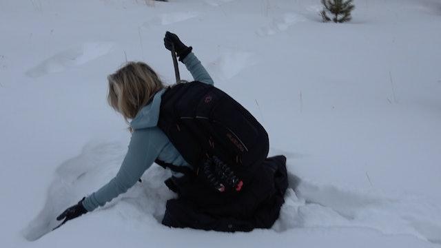 Footprints in the Snow Recap (Sasquatch Journey)...