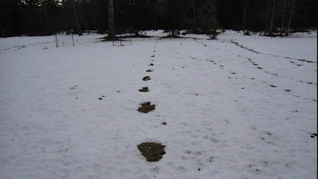 How to Determine Bigfoot Prints (Thom Cat Cantrall)
