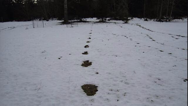 How to Determine Bigfoot Prints (Thom...