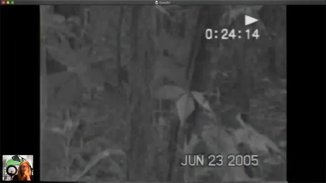 EXCLUSIVE BIGFOOT VIDEO!