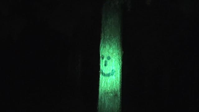Smiley Faced Tree