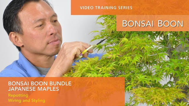 BUNDLE: Both Japanese Maple Training Videos
