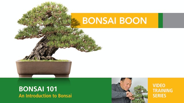 Bonsai 101: An Introduction to Bonsai